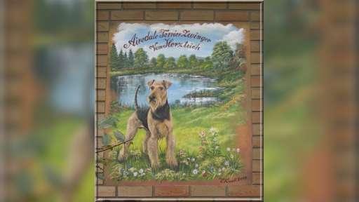 Airedale Terrier Zuchstätte Vom Herzteich - vomherzteich
